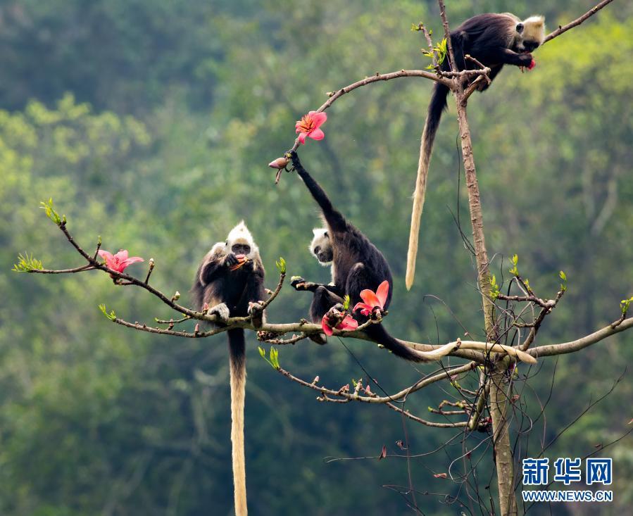 http://www.xinhuanet.com/photo/2021-02/24/1127135457_16141698965131n.jpg