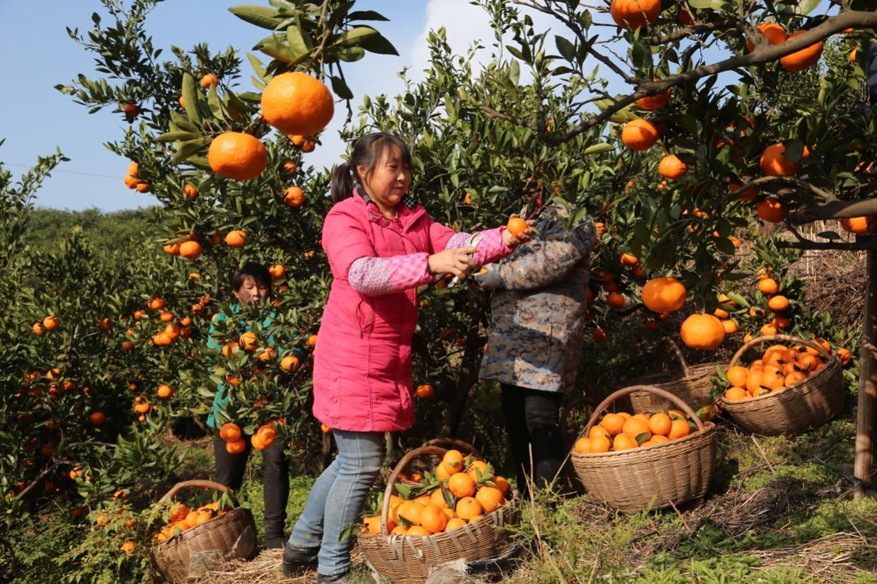 人站在水果摊边的橘子  描述已自动生成